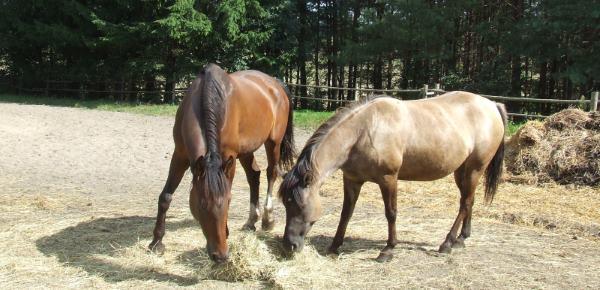 Agroturystyka Warmia i Mazury z jazdą konną